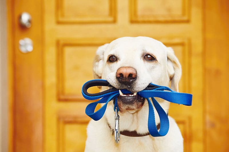 The Rise of Pet-Friendly Hotels