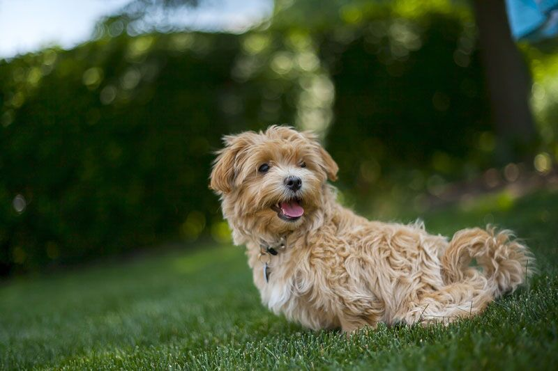 WoodSpring Hotels Roll Out Welcome Mat to Pets Nationwide